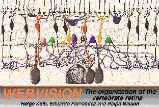 Webvision